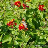 10-26-14 Dallas Arboretum - _IGP4328.JPG