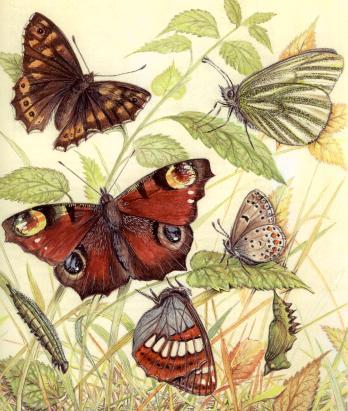 Mariposas sobre las hojas