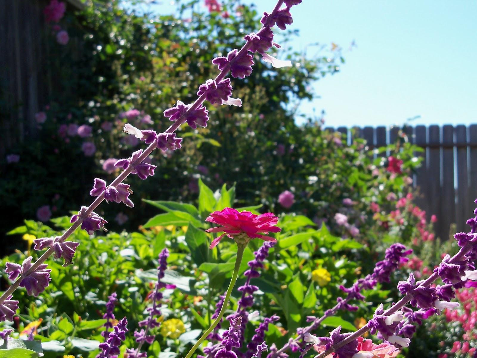 Gardening 2012 - 115_1563.JPG
