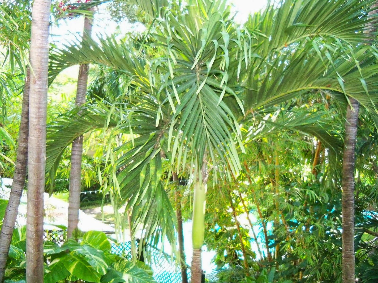 Key West Vacation - 116_5437.JPG