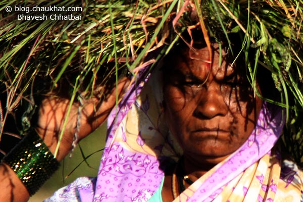 Close-up portrait of an Indian lady farmer carrying grass feed for her cows and buffalos
