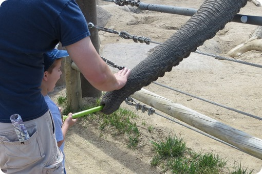 Feeding the Elephant at Cheyenne Mountain Zoo