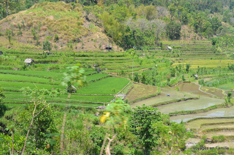 On the road to Amed. RIce fields