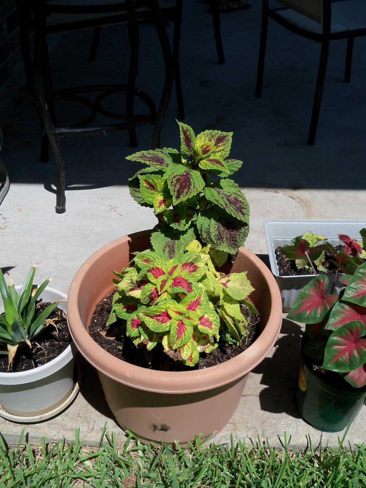 Gardening 2010, Part Three - 101_4471.JPG