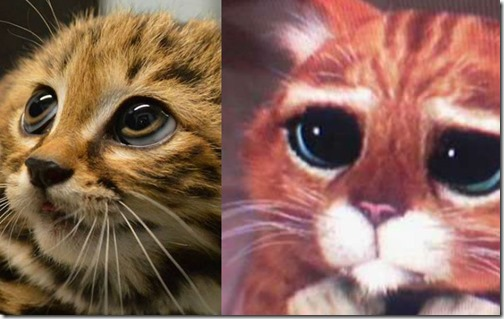 humor gatos (1)