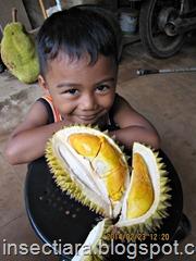 Dai dan durian kuning_2