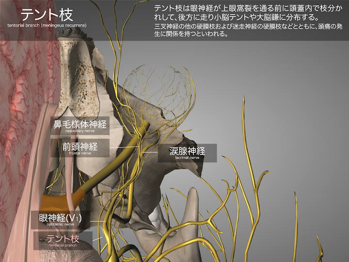 2014-29a02テント枝2048-1536.png