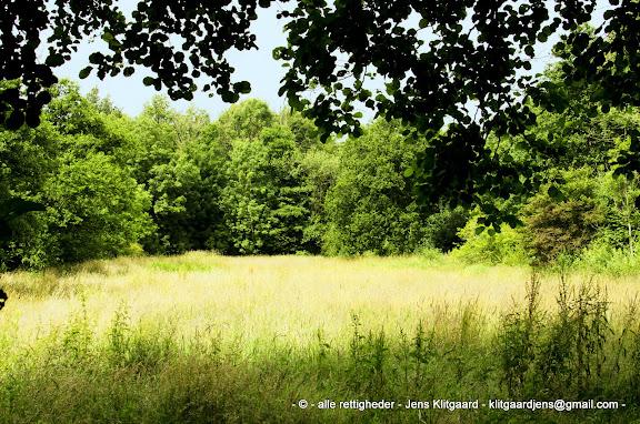 Eng i Østerskoven ved Haderslev