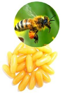 vien uong sua ong chua