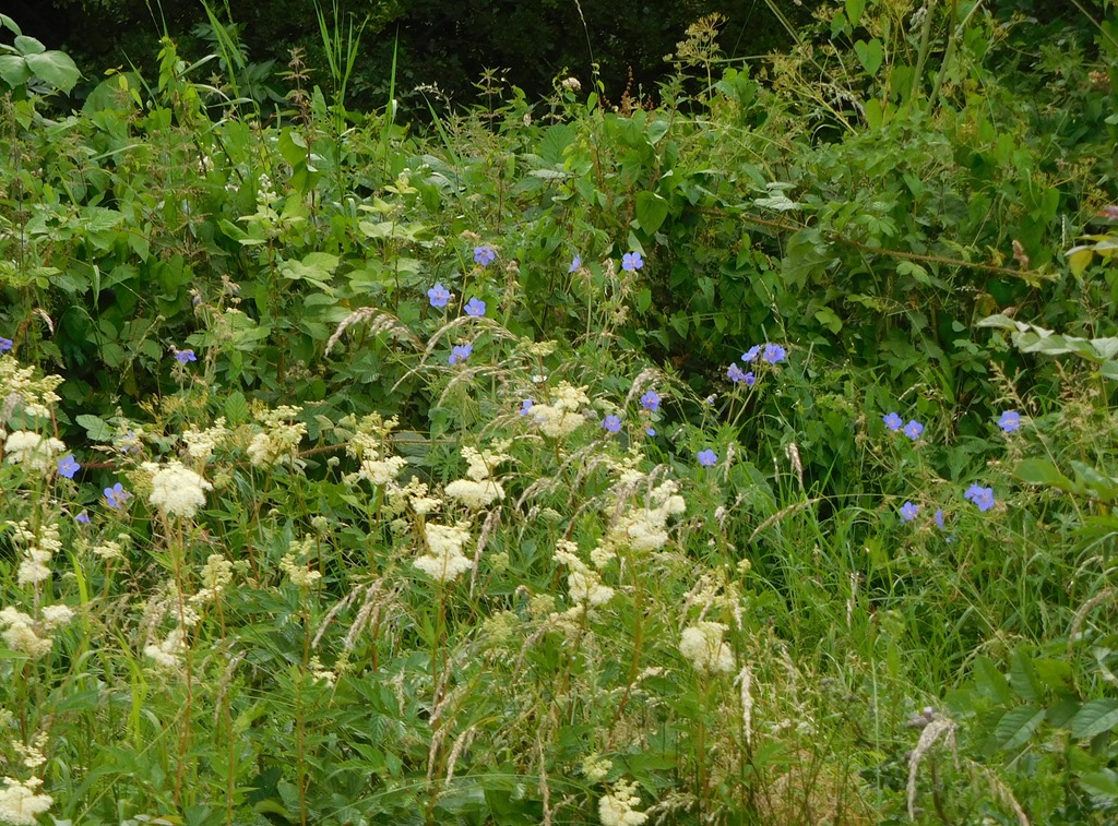 [13-meadowsweet-and-geranium-past-ans]