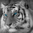 Lord TigeRR avatar image