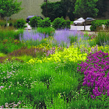 Naturalized, colorful low maintenance plantings