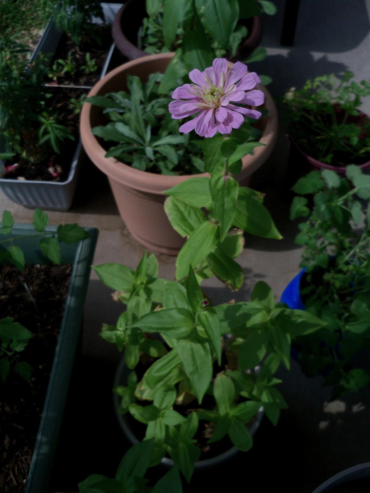 Gardening 2011 - 100_8705.JPG