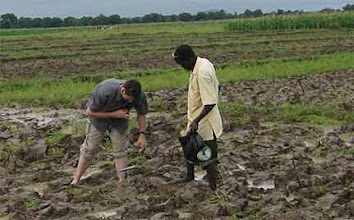 Photo: Tim Krupnik and Brema, a Burkinabe farmer, are shown above taking soil samples at the evaluation site in Valle du Kou.