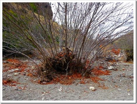 Lower Burro Mesa Pouroff