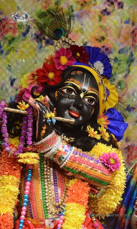 ISKCON GEV (Wada) Deity Darshan 21 Jan 2016 (9)