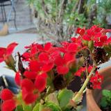 Gardening 2012 - 115_1591.JPG