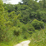 Sukau (Sabah) : lieu de passage de P. palinurus, P. nephelus, etc. 3 août 2011. Photo : J.-M. Gayman