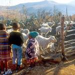AB02 Kids & Goats.jpg