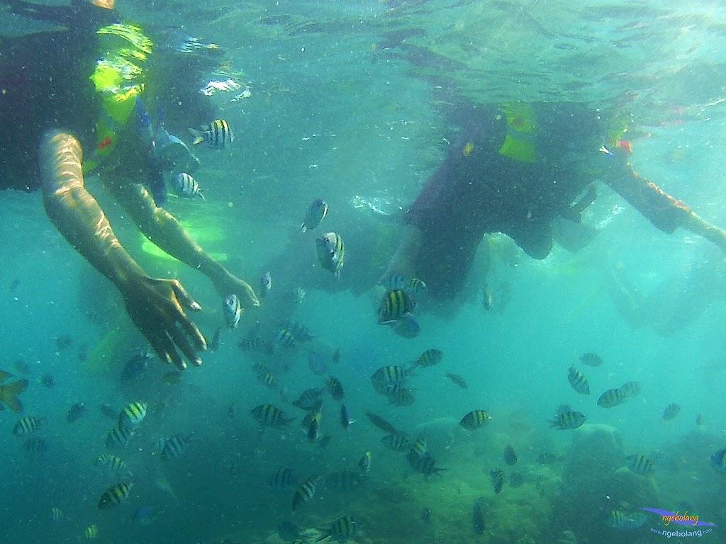 pulau harapan, 16-17 agustus 2015 skc 047