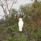500 km von Thredbo nach Merimbula - Kakadu