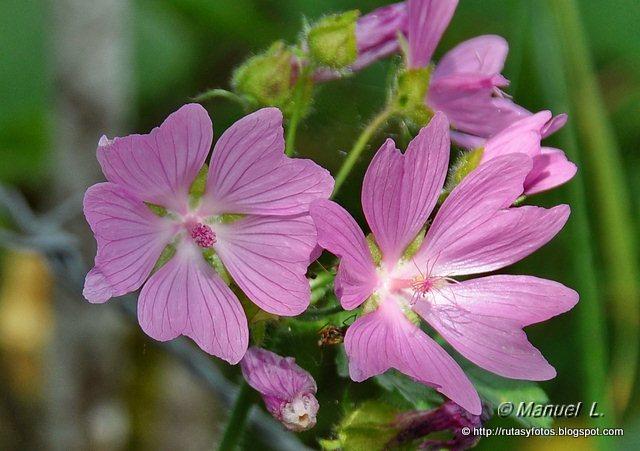 Flora del Parque Natural de Redes
