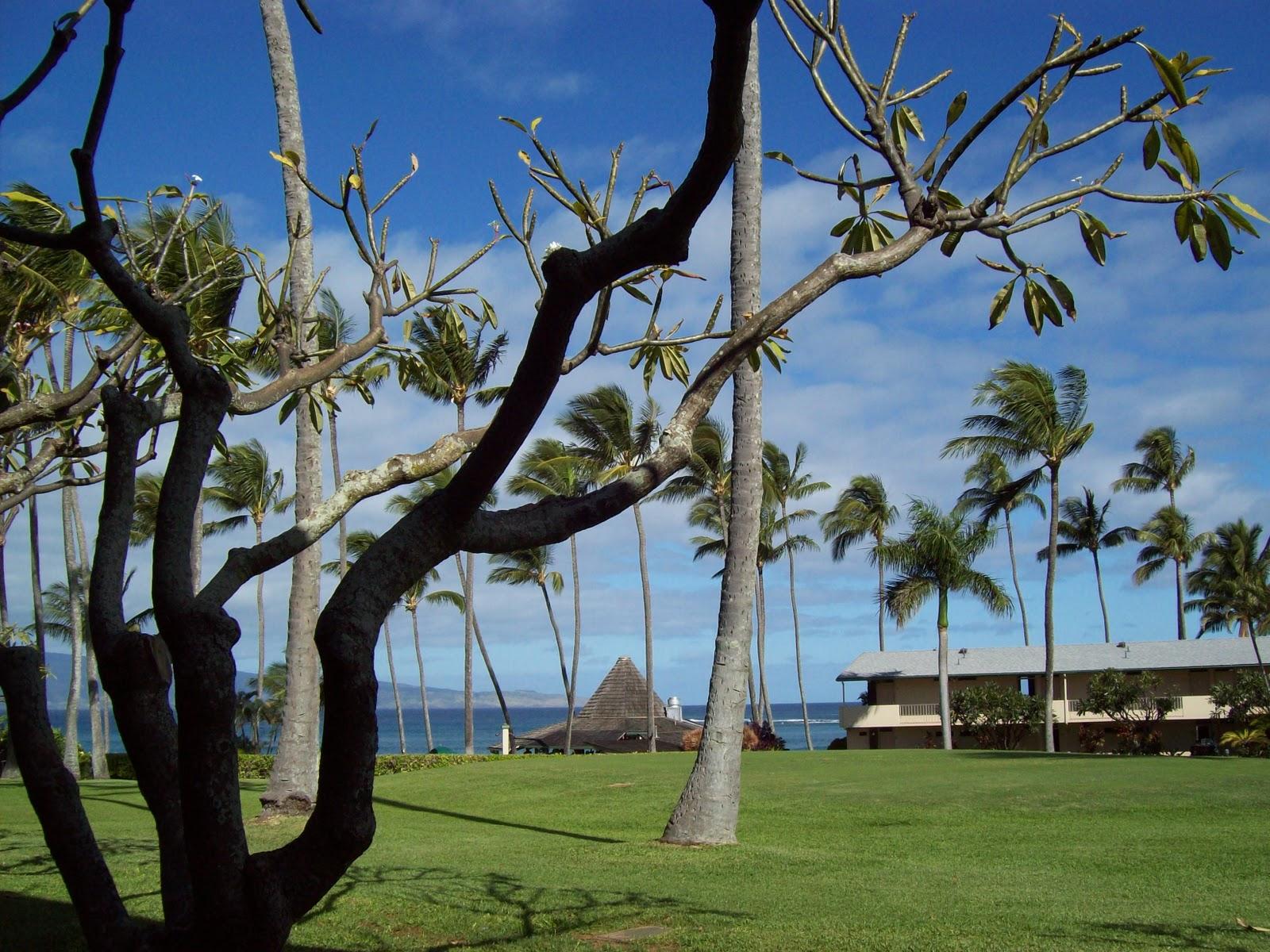 Hawaii Day 6 - 100_7647.JPG