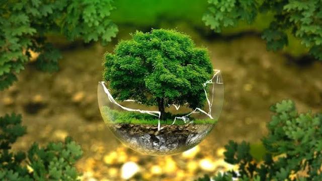 Environment study notest for ctet/uptet - पर्यावरणीय अध्ययन के नोट्स