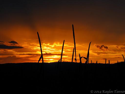 Wasi_Alagwa_Tanzania-2011-Kaylen-257photo