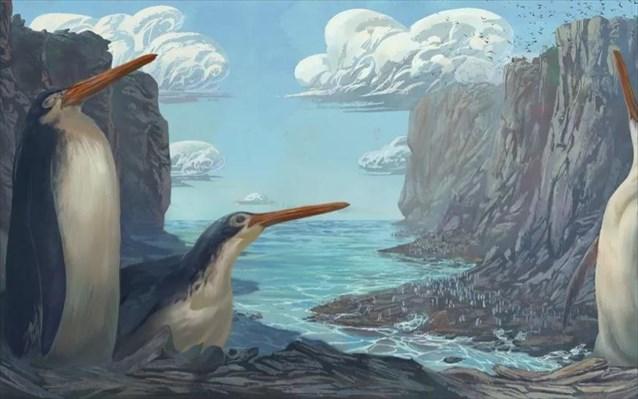 Ανακαλύφθηκε ένας ακόμη πιγκουίνος γίγας