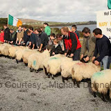 Judging the Ewe Lamb (confined) class at the 21st Achill Sheep Show Taispeántas Caorach Acla 2007 at Pattens Bar, Derreens Achill. Photo: © Michael Donnell
