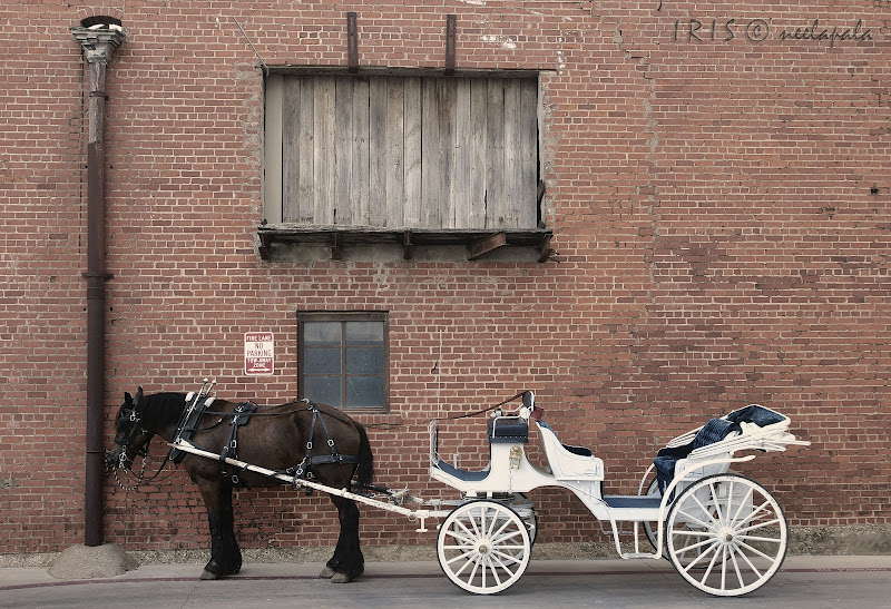 Horse drawn carriage, Fort Worth, Stockyards, Vintage