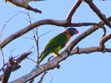 parrot_1L.jpg