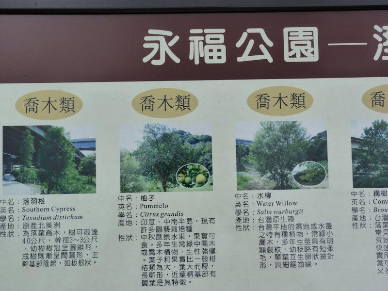 TAIWAN.Taipei TREASURE HILL Un mini quartier réhabilité à 10 mn a pied de gonguan MRT - P1020551.JPG