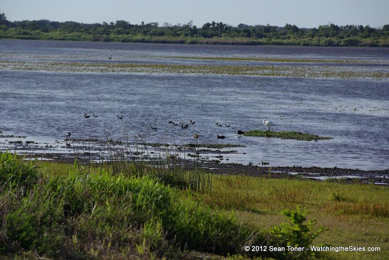 04-06-12 Myaka River State Park - IMGP4449.JPG