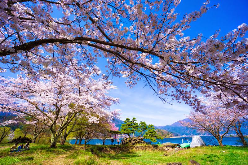 富士ビューホテル 桜 写真25