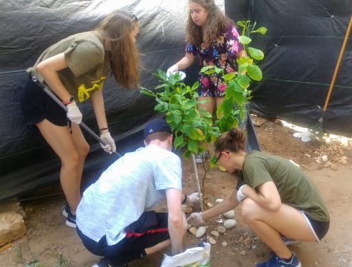 09 посадили дерево в дворике музея.jpg