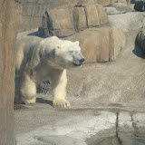 Pittsburgh Zoo Revisited - DSC05205.JPG