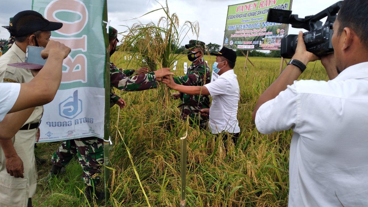 Tingkatkan Ketahanan Pangan di Konawe, Dandim dan Pemda Kompak Panen Raya Padi Dengan Penerapan Tekhnologi Biotani
