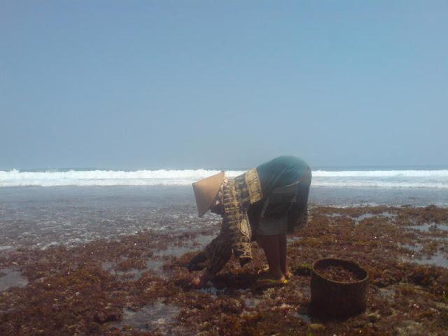 Pantai Watu Lawang : Mencari Rumput Laut