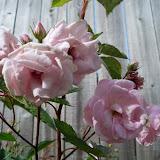 Gardening 2010 - 101_1406.JPG