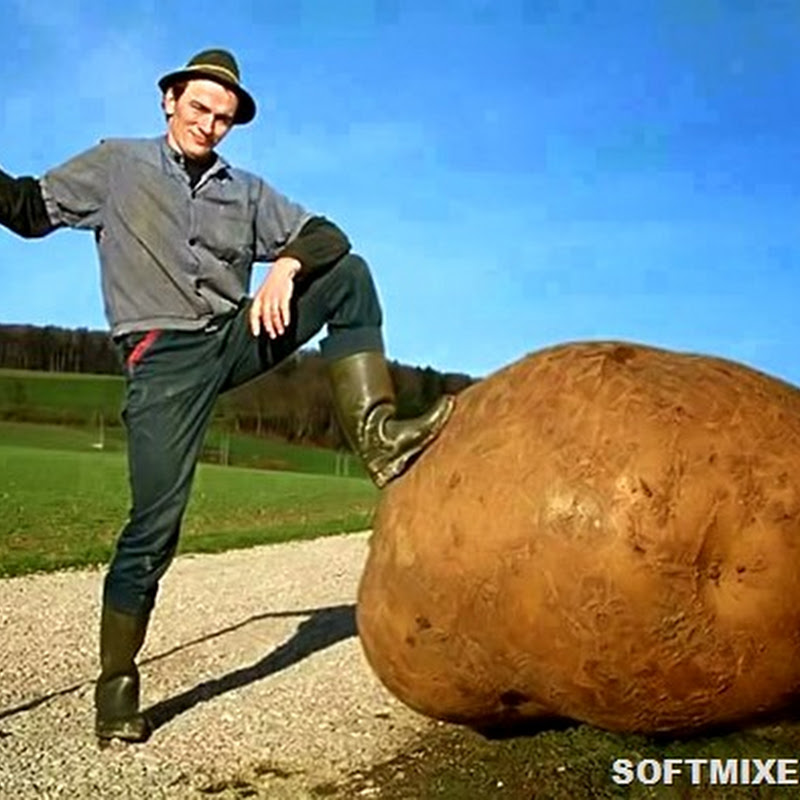 Любопытные факты о картофеле