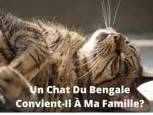 Un Chat Du Bengale Convient-Il À Ma Famille?