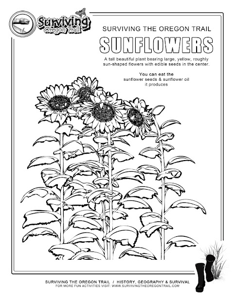 Coloring Page Sunflowers Surviving The Oregon Trail