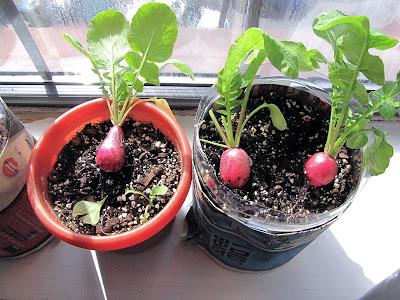 Bucolic Bushwick Indoor Gardening