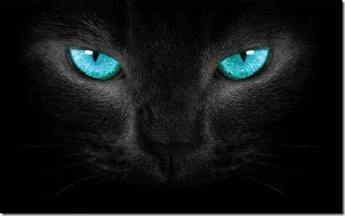 fotos de gatos (9)