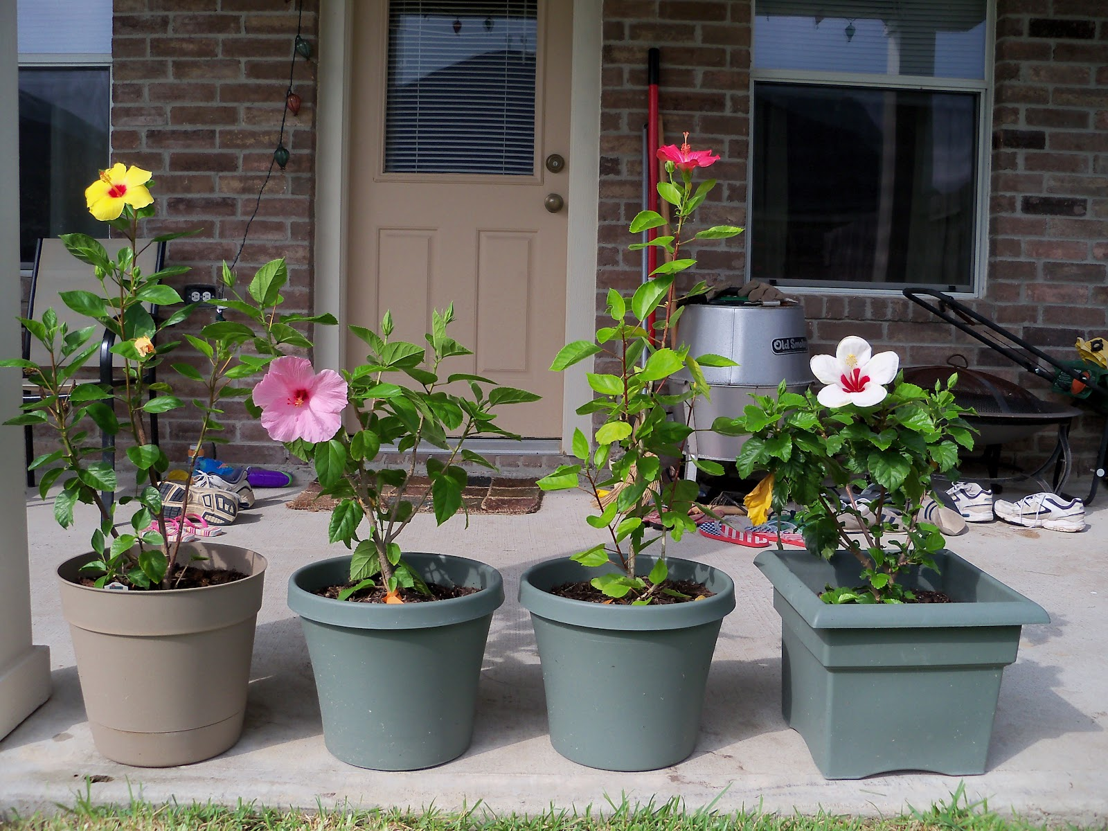 Gardening 2010, Part Three - 101_4960.JPG
