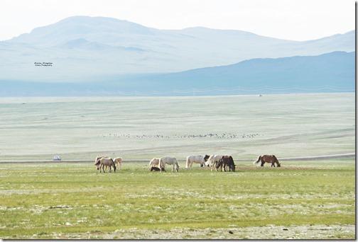 Mongolia79