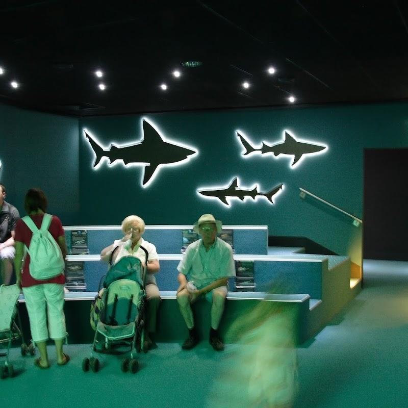 Aquarium_32.jpg