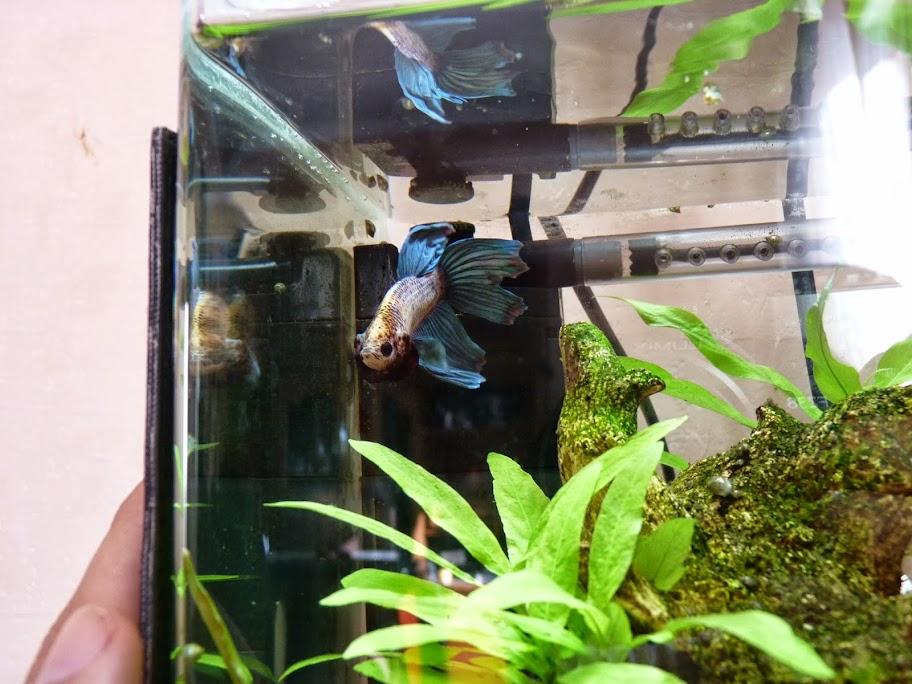 Ma petit histoire Aquariophile de 2009 à aujourd'hui  P1040855